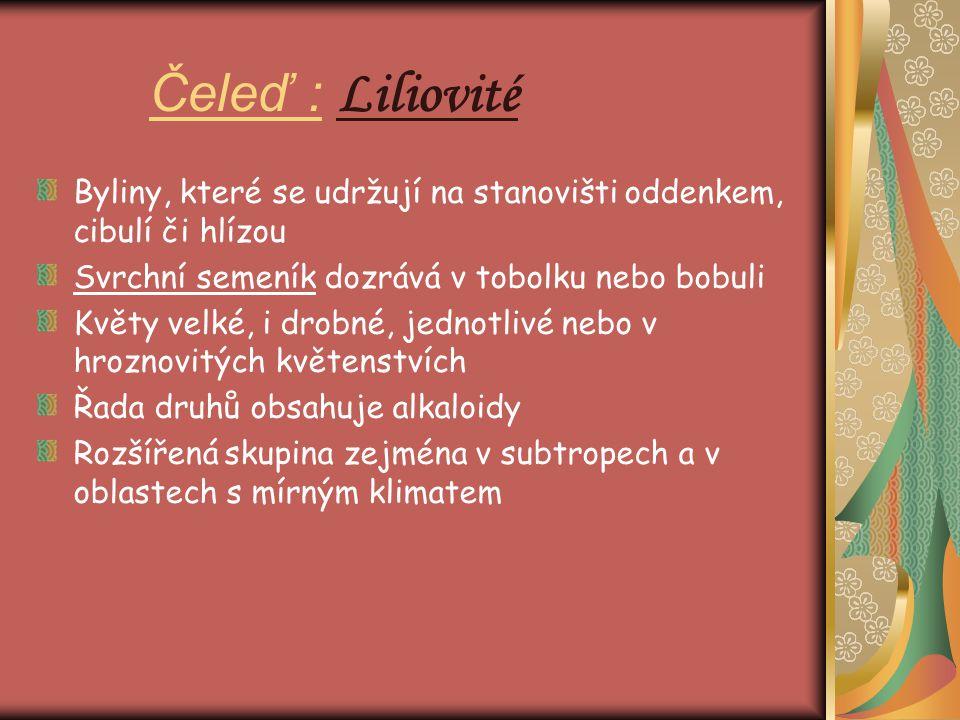 Čeleď : Liliovité Byliny, které se udržují na stanovišti oddenkem, cibulí či hlízou. Svrchní semeník dozrává v tobolku nebo bobuli.