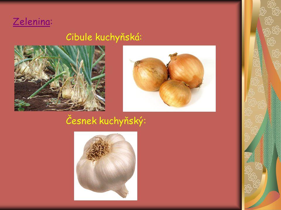 Zelenina: Cibule kuchyňská: Česnek kuchyňský: