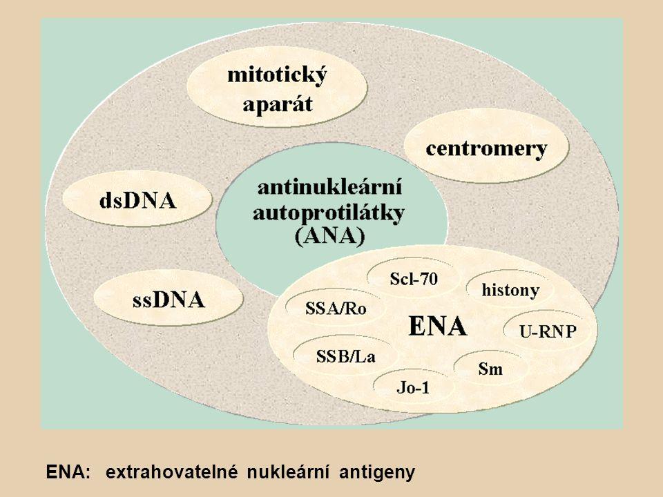 ENA: extrahovatelné nukleární antigeny
