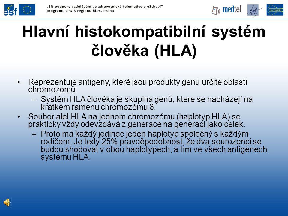 Hlavní histokompatibilní systém člověka (HLA)