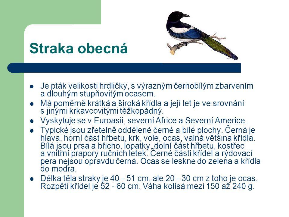 Straka obecná Je pták velikosti hrdličky, s výrazným černobílým zbarvením a dlouhým stupňovitým ocasem.
