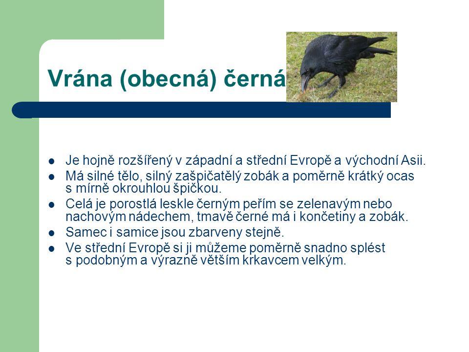 Vrána (obecná) černá Je hojně rozšířený v západní a střední Evropě a východní Asii.