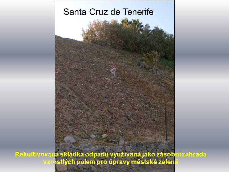 Santa Cruz de Tenerife Rekultivovaná skládka odpadu využívaná jako zásobní zahrada vzrostlých palem pro úpravy městské zeleně.