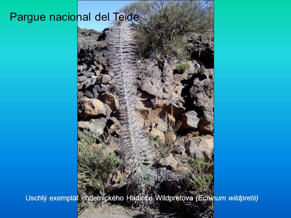 Pargue nacional del Teide