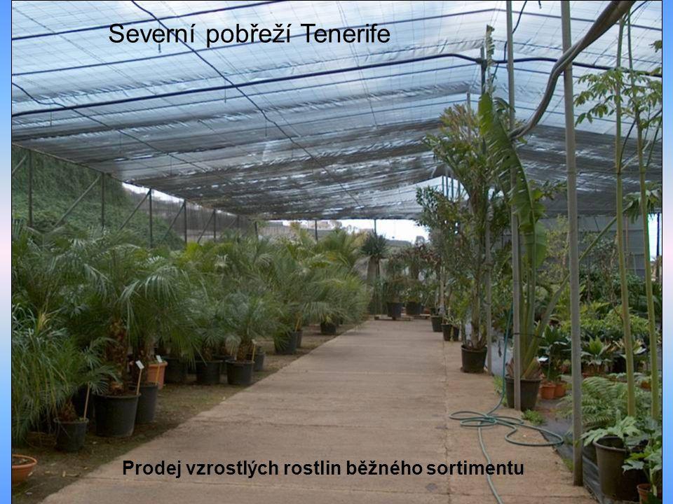 Prodej vzrostlých rostlin běžného sortimentu