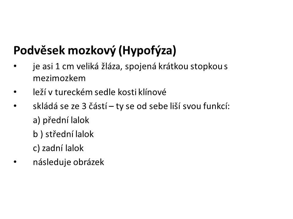 Podvěsek mozkový (Hypofýza)