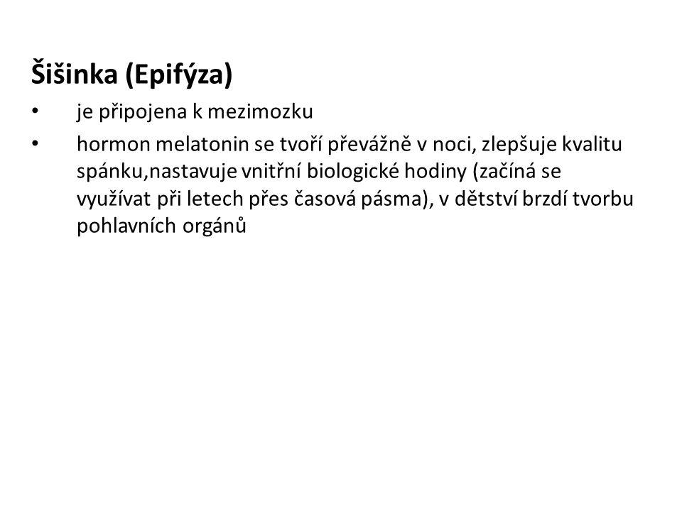 Šišinka (Epifýza) je připojena k mezimozku