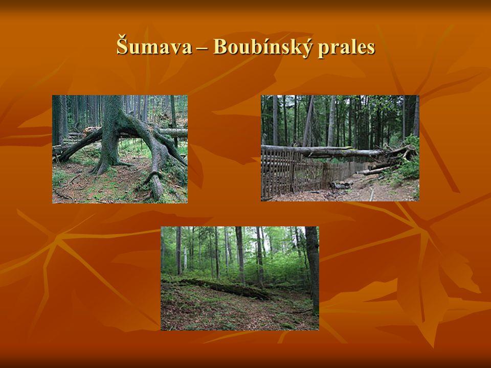 Šumava – Boubínský prales