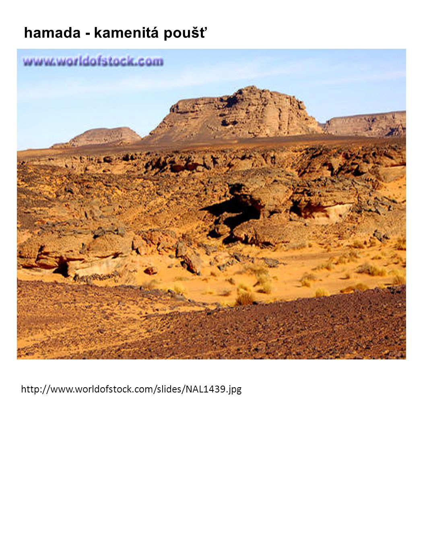 hamada - kamenitá poušť