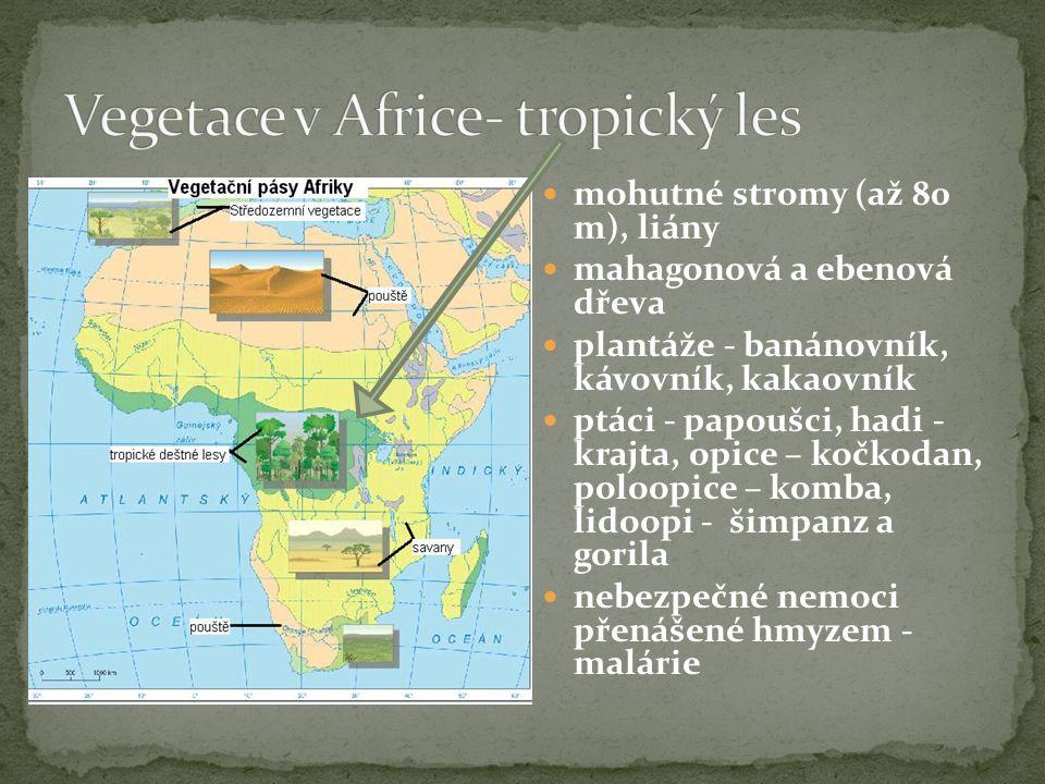 Vegetace v Africe- tropický les