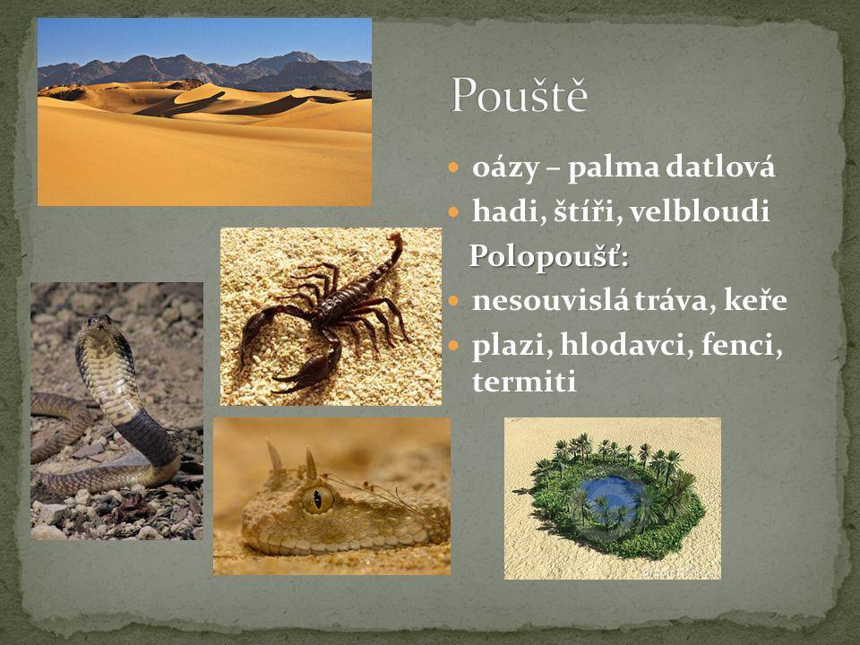 Pouště oázy – palma datlová hadi, štíři, velbloudi Polopoušť: