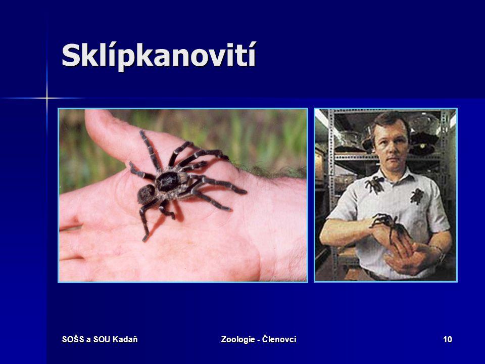 Sklípkanovití SOŠS a SOU Kadaň Zoologie - Členovci