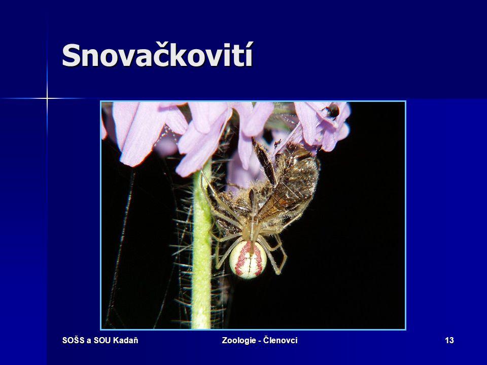Snovačkovití SOŠS a SOU Kadaň Zoologie - Členovci