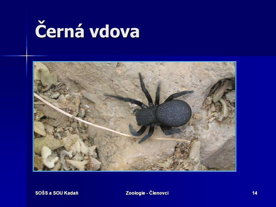 Černá vdova SOŠS a SOU Kadaň Zoologie - Členovci