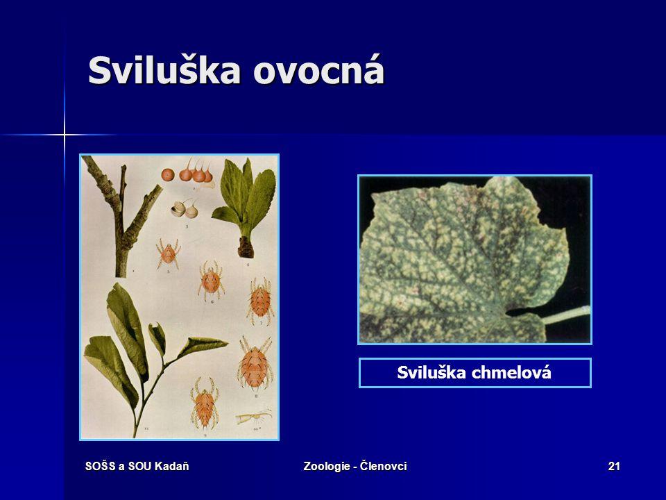 Sviluška ovocná Sviluška chmelová SOŠS a SOU Kadaň Zoologie - Členovci