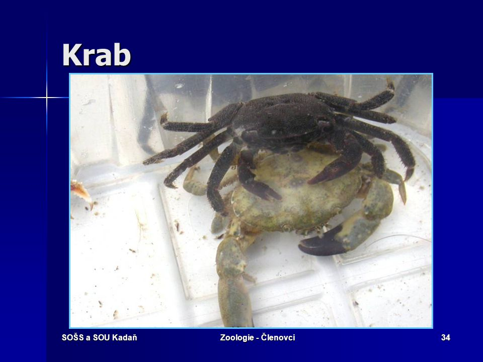 Krab SOŠS a SOU Kadaň Zoologie - Členovci