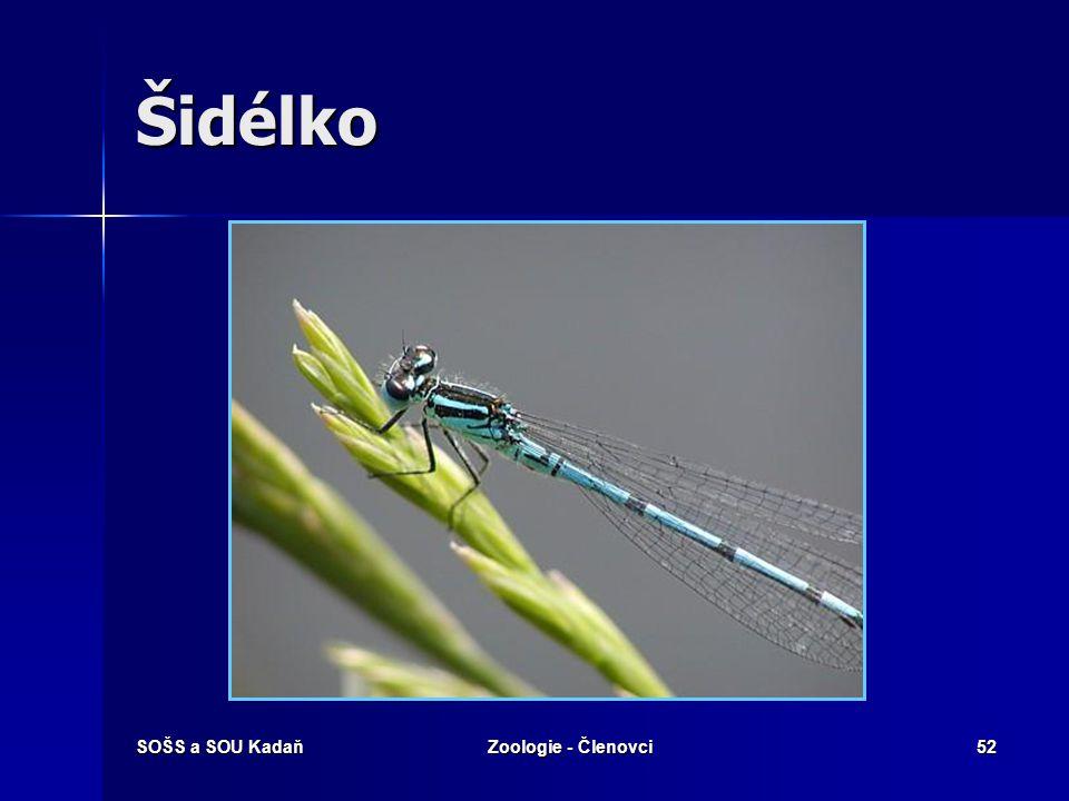 Šidélko SOŠS a SOU Kadaň Zoologie - Členovci