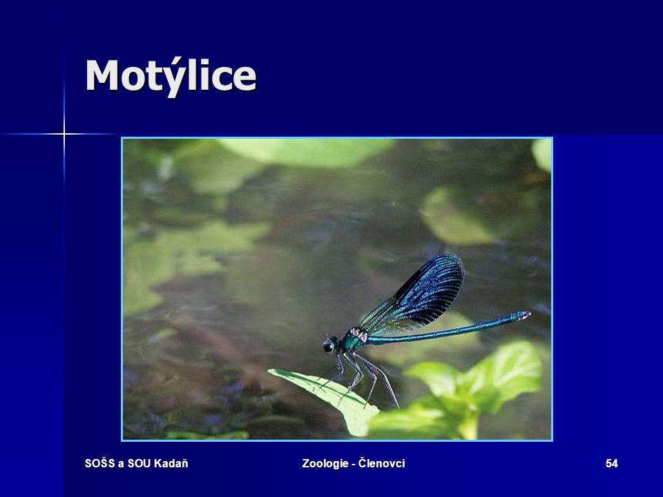 Motýlice SOŠS a SOU Kadaň Zoologie - Členovci