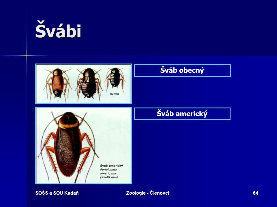 Švábi Šváb obecný Šváb americký SOŠS a SOU Kadaň Zoologie - Členovci
