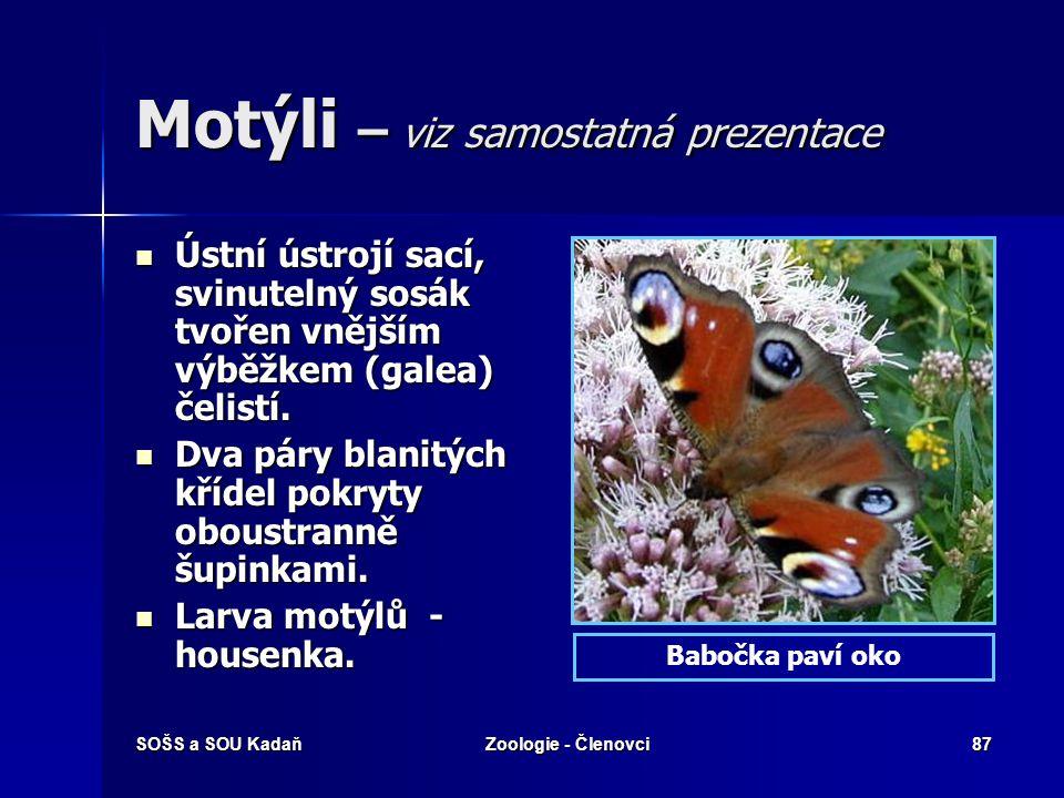 Motýli – viz samostatná prezentace