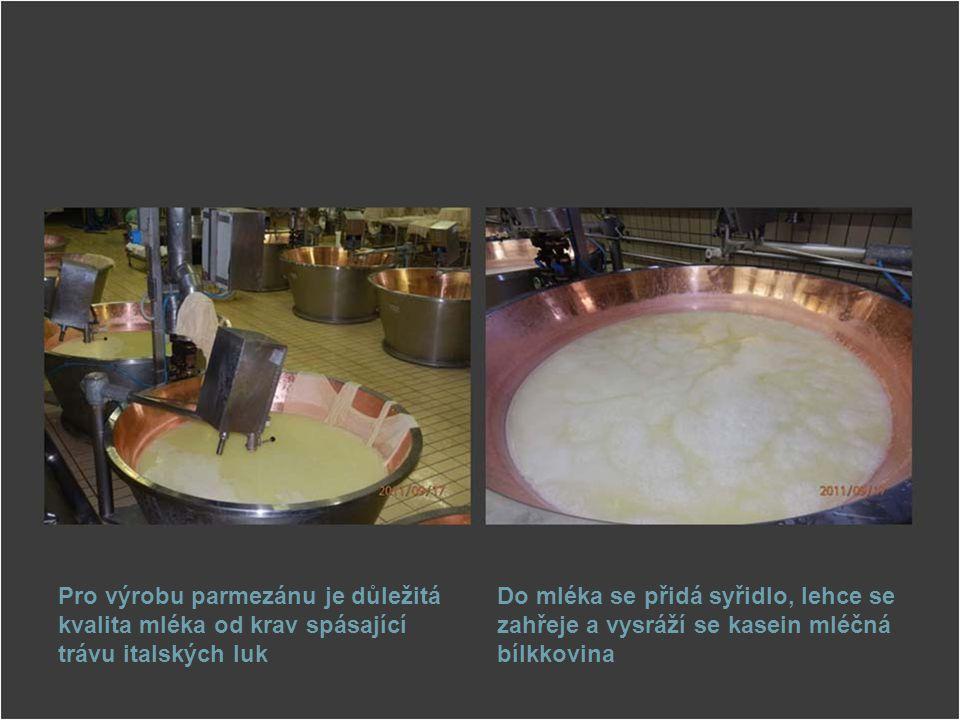 Pro výrobu parmezánu je důležitá kvalita mléka od krav spásající trávu italských luk