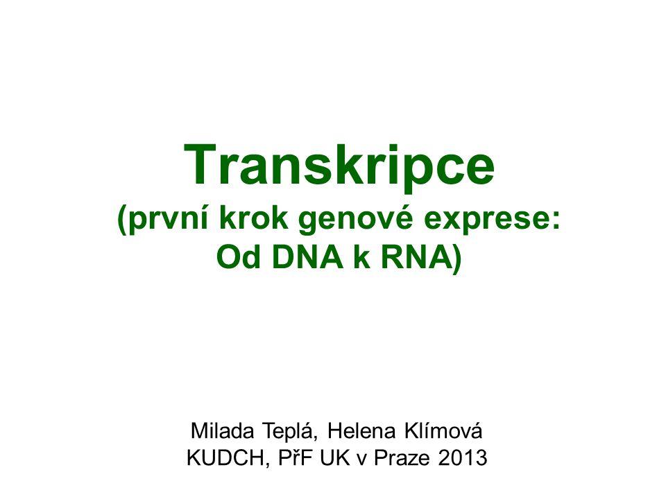 Transkripce (první krok genové exprese: Od DNA k RNA)