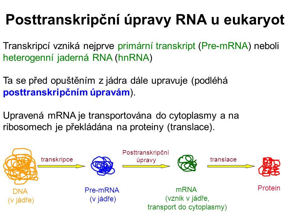Posttranskripční úpravy RNA u eukaryot