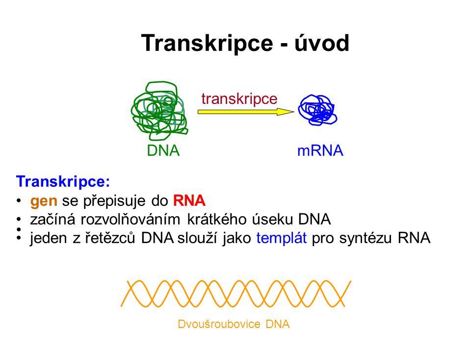 Transkripce - úvod DNA transkripce mRNA Transkripce: