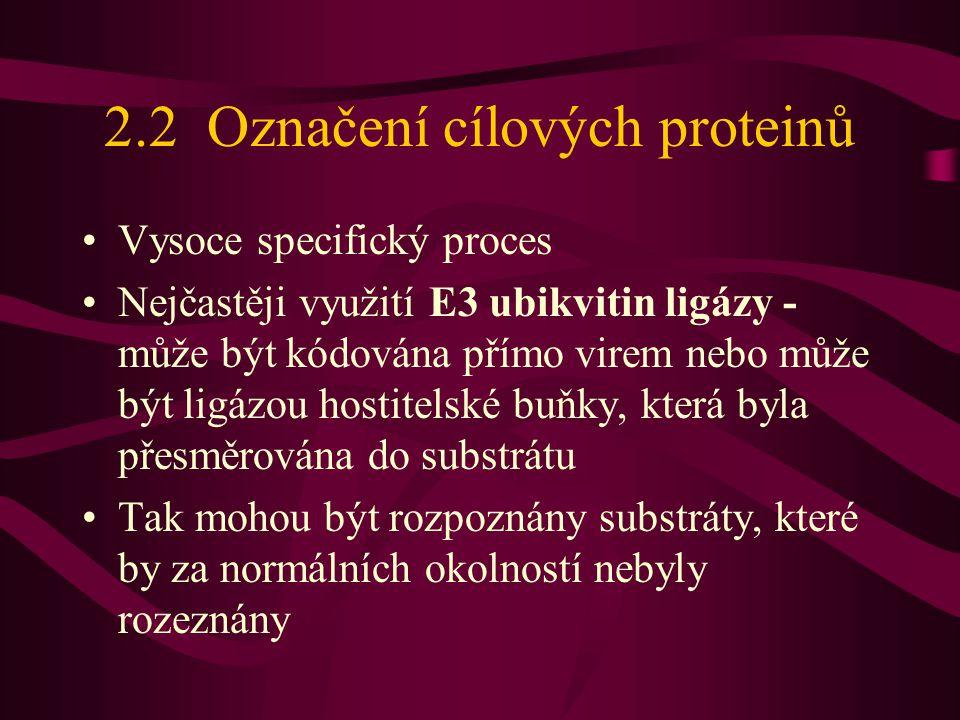 2.2 Označení cílových proteinů