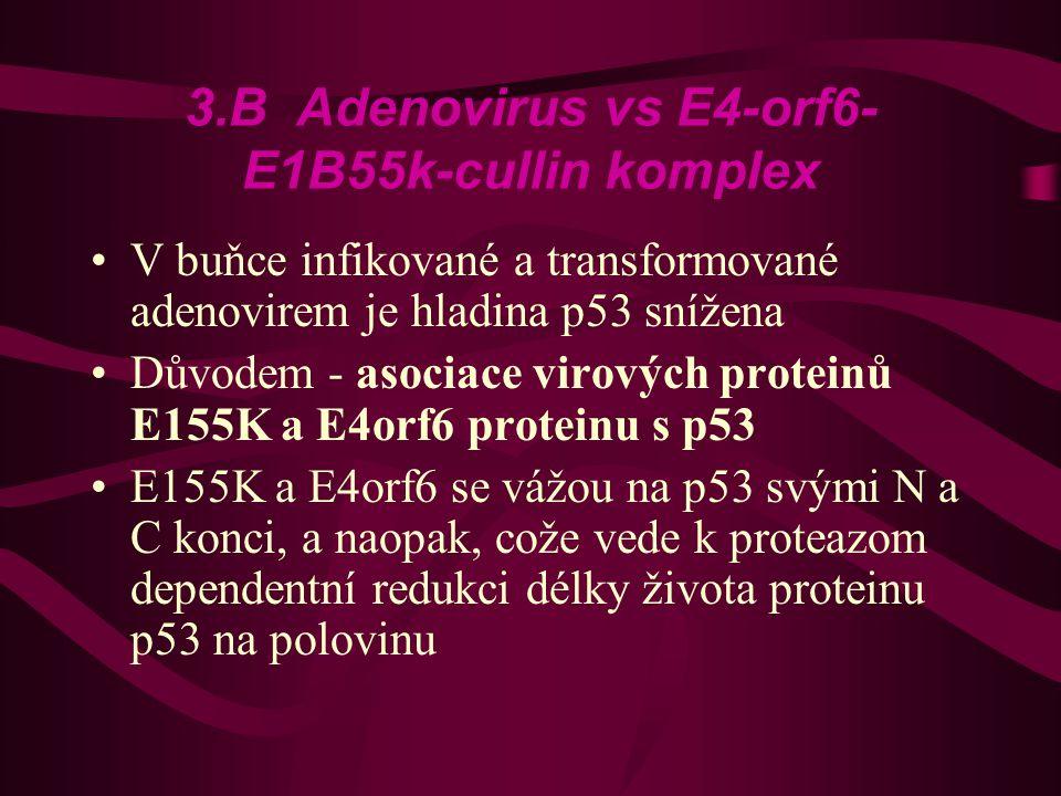 3.B Adenovirus vs E4-orf6-E1B55k-cullin komplex