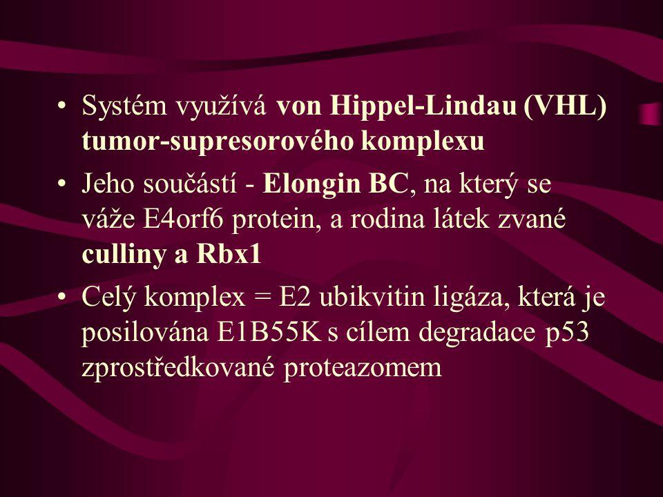 Systém využívá von Hippel-Lindau (VHL) tumor-supresorového komplexu