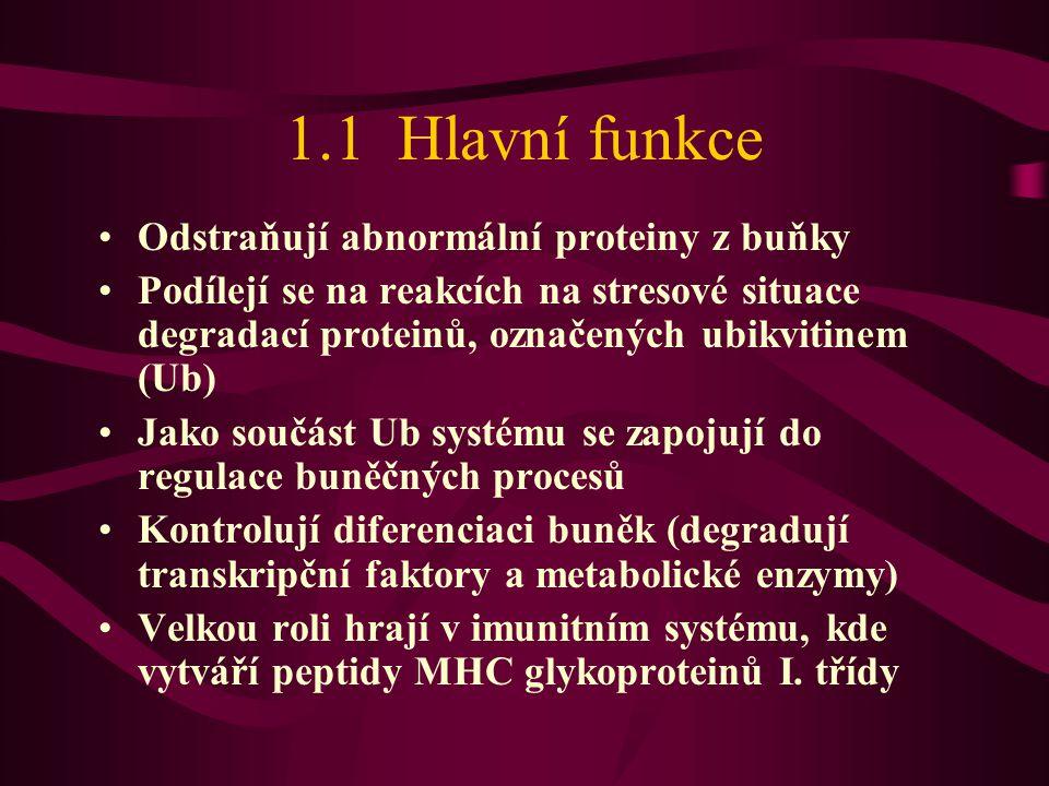 1.1 Hlavní funkce Odstraňují abnormální proteiny z buňky