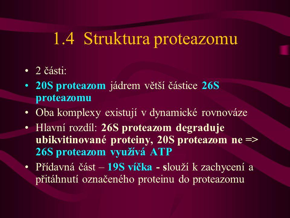 1.4 Struktura proteazomu 2 části: