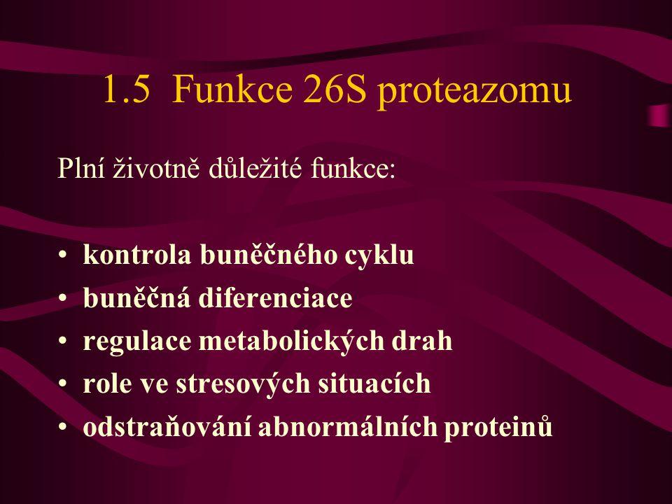 1.5 Funkce 26S proteazomu Plní životně důležité funkce: