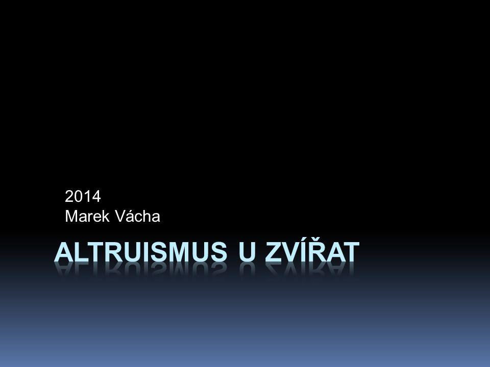 2014 Marek Vácha Altruismus u zvířat