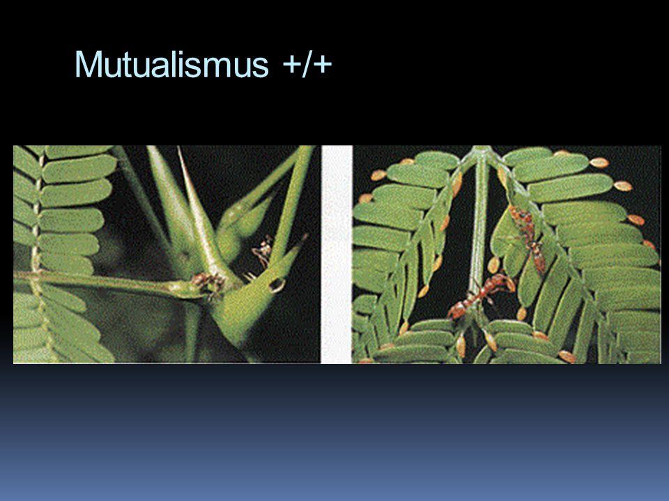 Mutualismus +/+