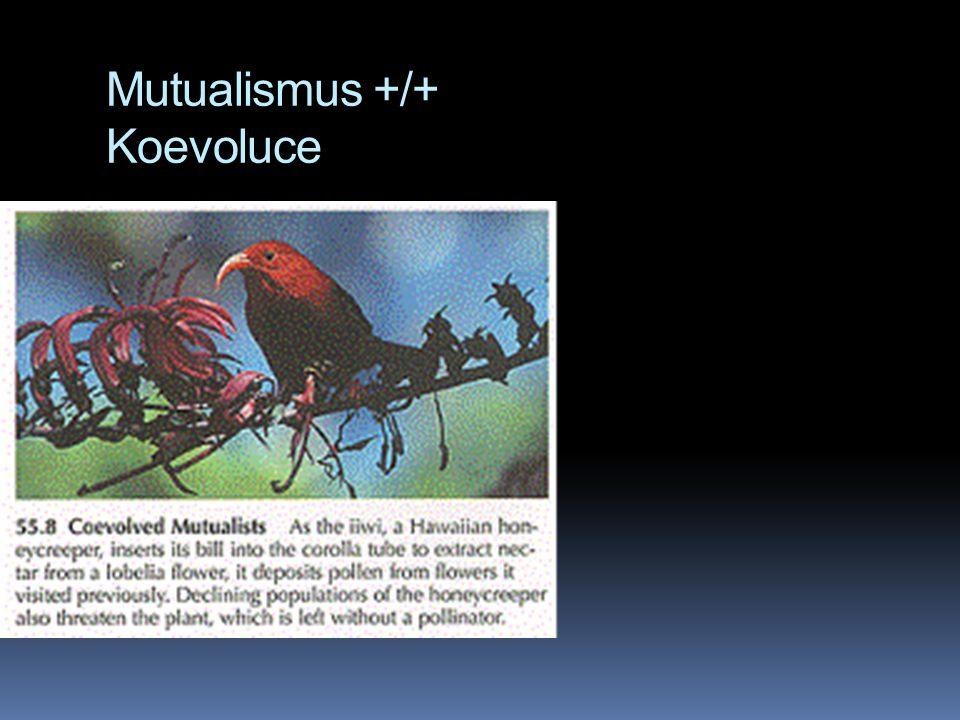 Mutualismus +/+ Koevoluce