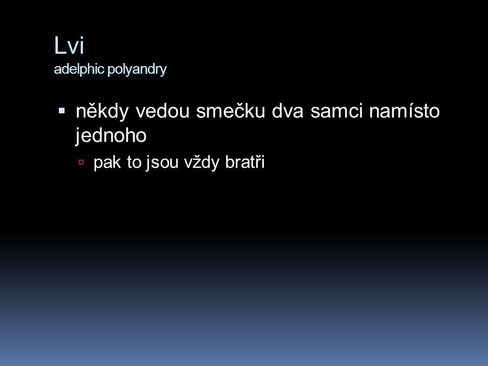 Lvi adelphic polyandry