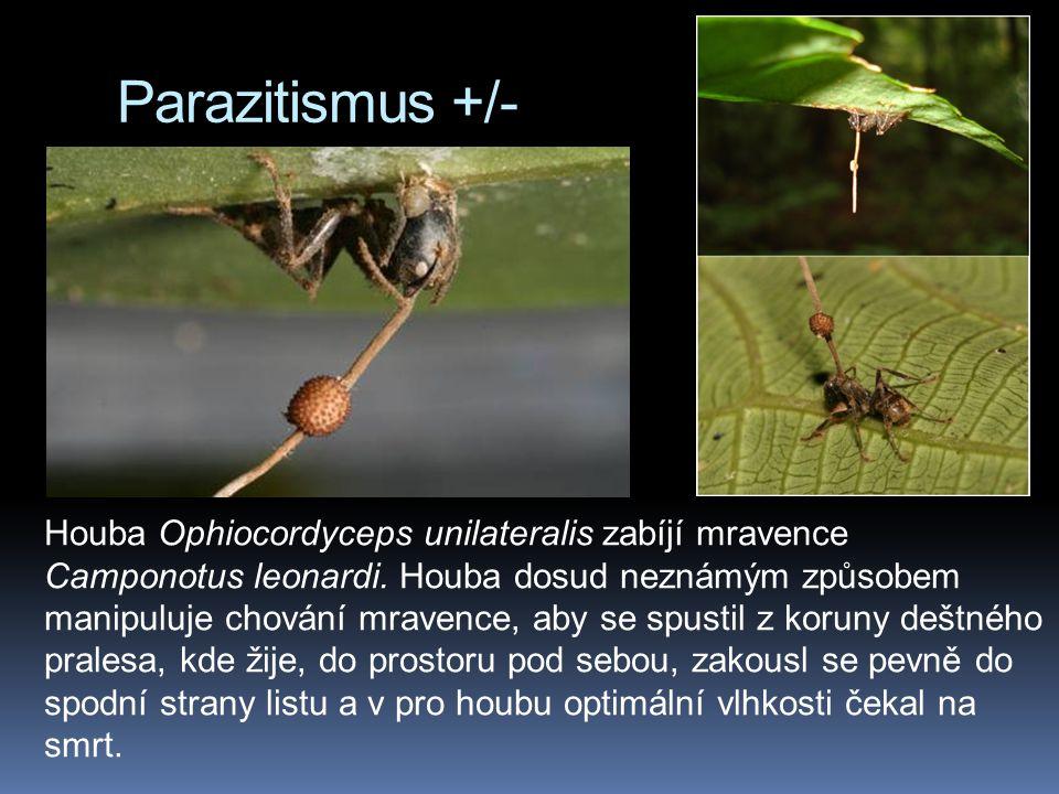 Parazitismus +/-