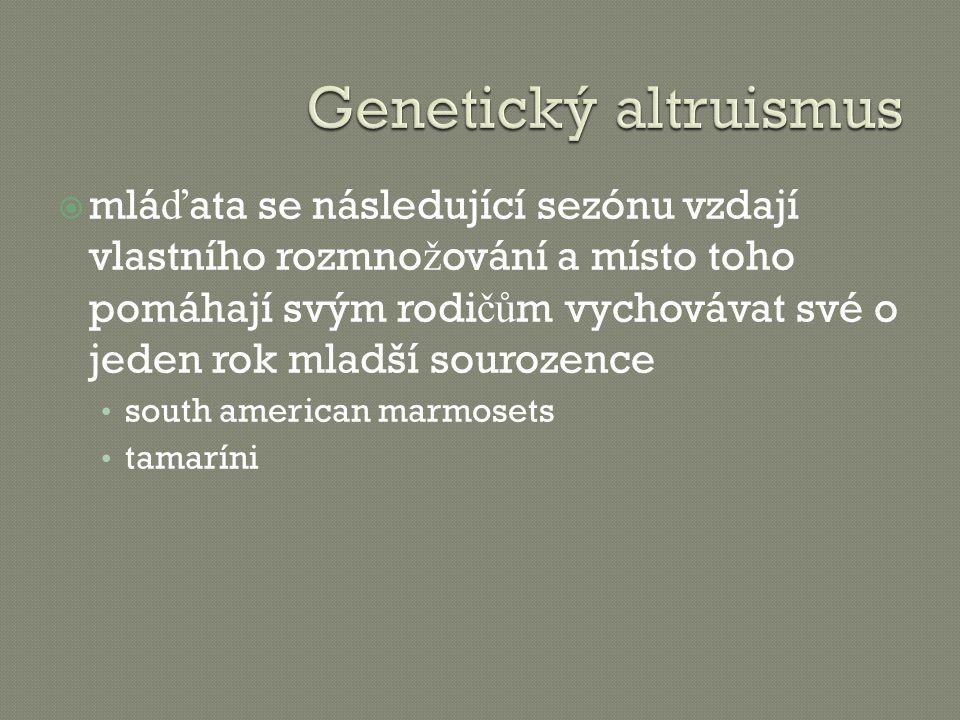 Genetický altruismus
