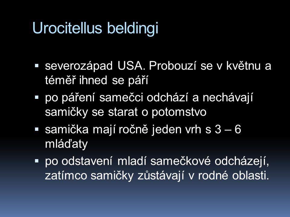 Urocitellus beldingi severozápad USA. Probouzí se v květnu a téměř ihned se páří.