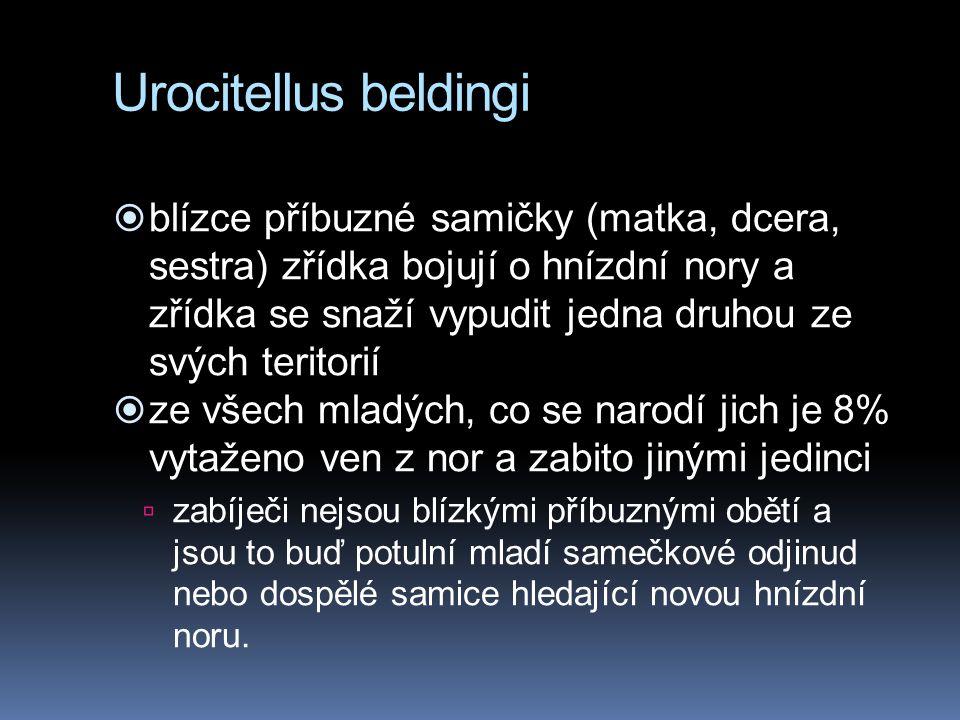 Urocitellus beldingi