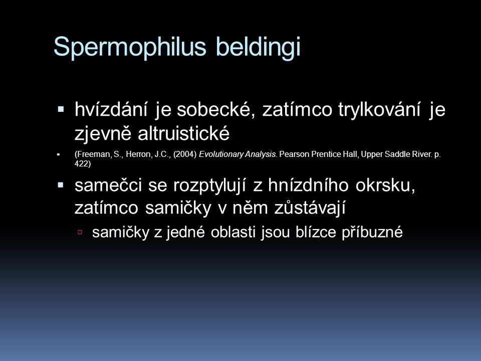 Spermophilus beldingi