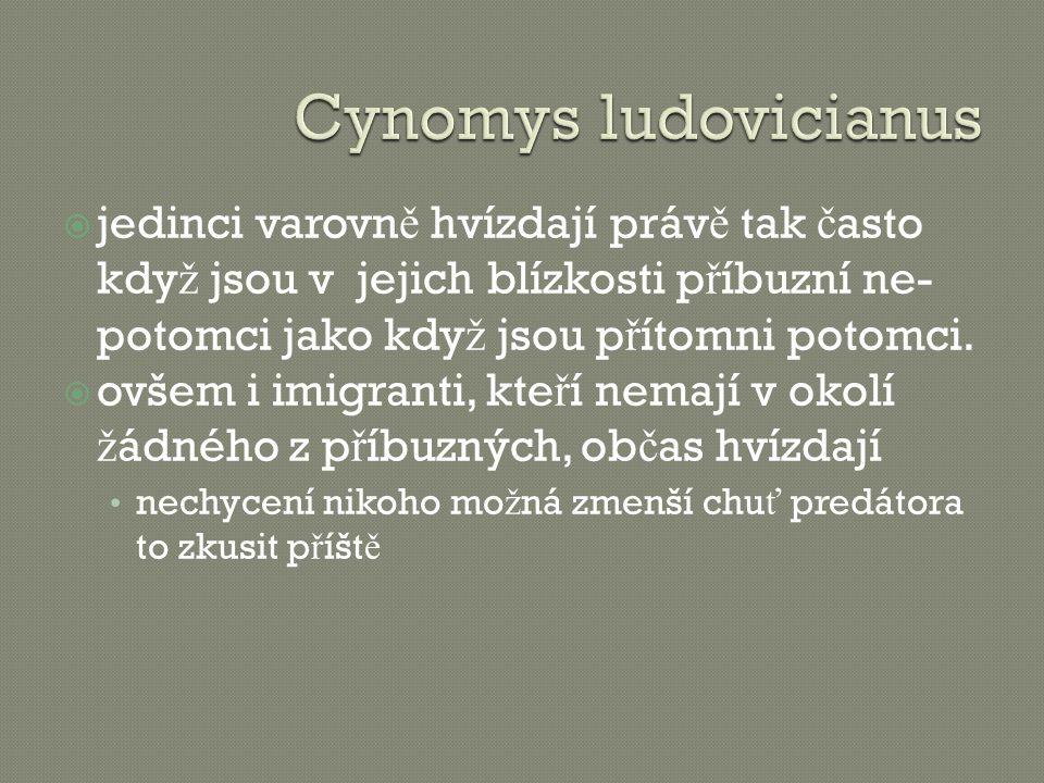 Cynomys ludovicianus jedinci varovně hvízdají právě tak často když jsou v jejich blízkosti příbuzní ne-potomci jako když jsou přítomni potomci.