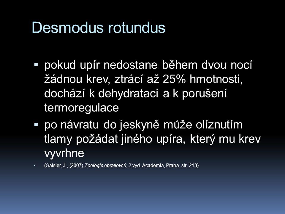 Desmodus rotundus pokud upír nedostane během dvou nocí žádnou krev, ztrácí až 25% hmotnosti, dochází k dehydrataci a k porušení termoregulace.