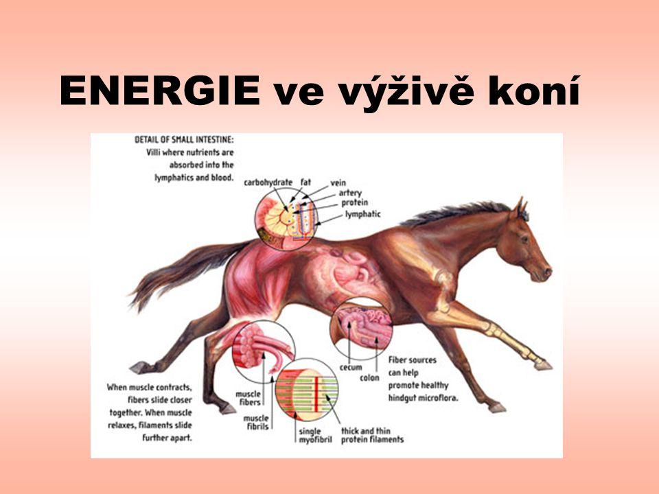 ENERGIE ve výživě koní