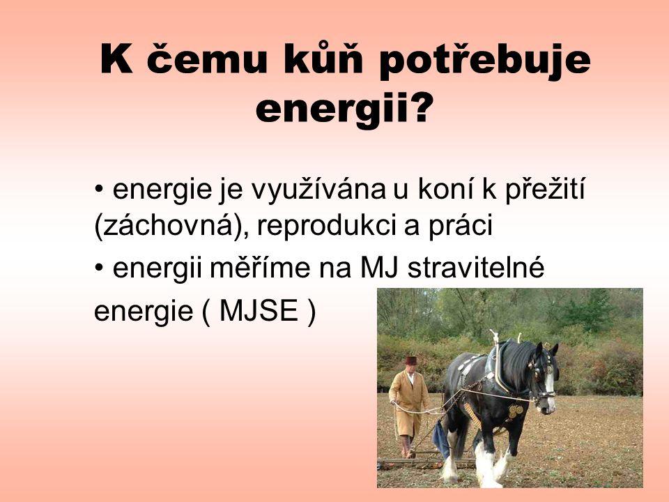 K čemu kůň potřebuje energii