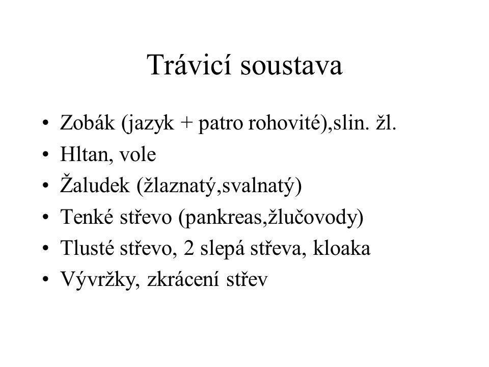 Trávicí soustava Zobák (jazyk + patro rohovité),slin. žl. Hltan, vole