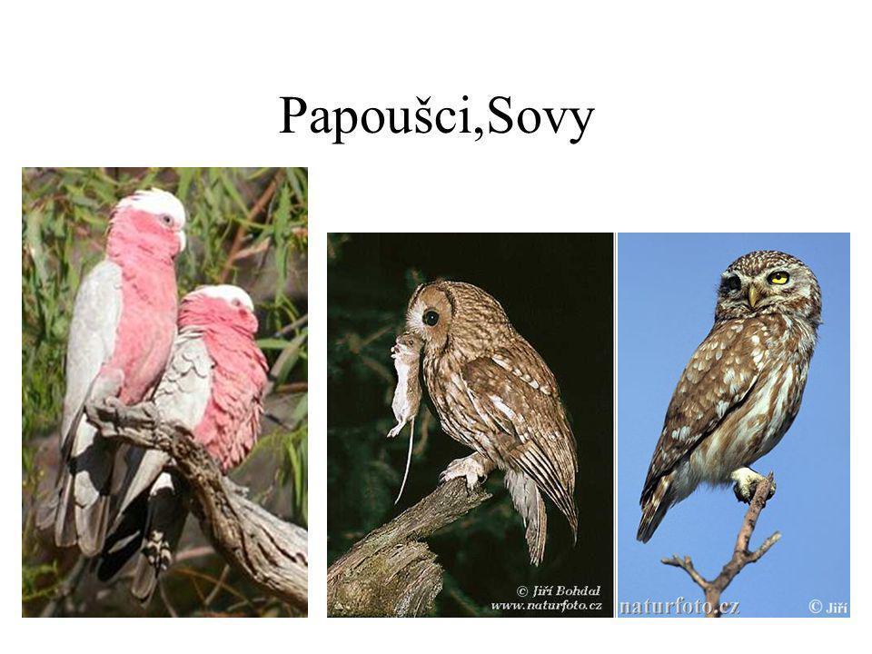 Papoušci,Sovy