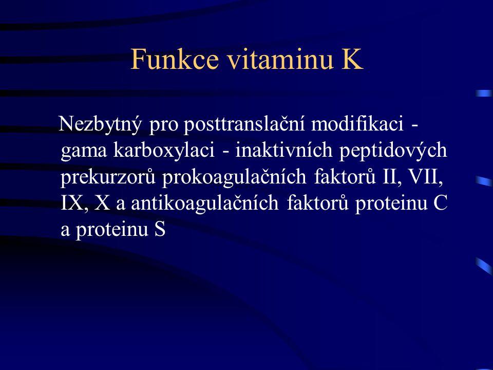 Funkce vitaminu K